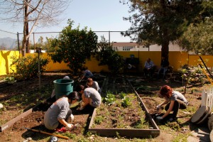 Working in the garden of the Pasadena Boys & Girls Club. Photo Lucia Loiso/Art Center College of Design