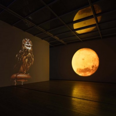 Diana Thater, A Cast of Falcons, 2008. Four video projectors, display computer, and two spotlights. Installation Photograph, Diana Thater: The Sympathetic Imagination, Los Angeles County Museum of Art. ©Diana Thater, photo ©Fredrik Nilsen